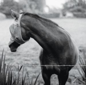 Kristin McClement - The Wild Grips album cover